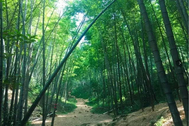 第一站:东星村—瓦坑村小竹林